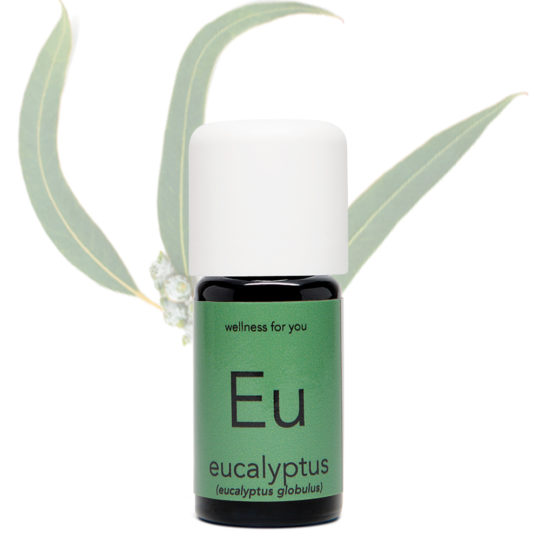 Eukalyptus - Eukalyptus globulus