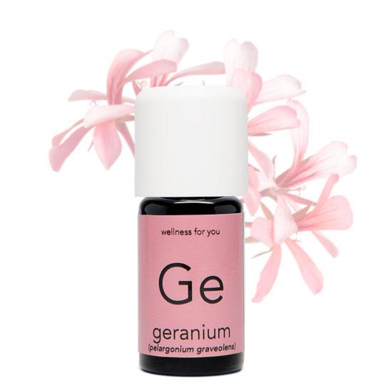 Geranie - Pelargonium graveolens